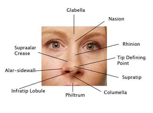 Facial Anatomy | Plastic Surgery Beverly Hills | LidLift